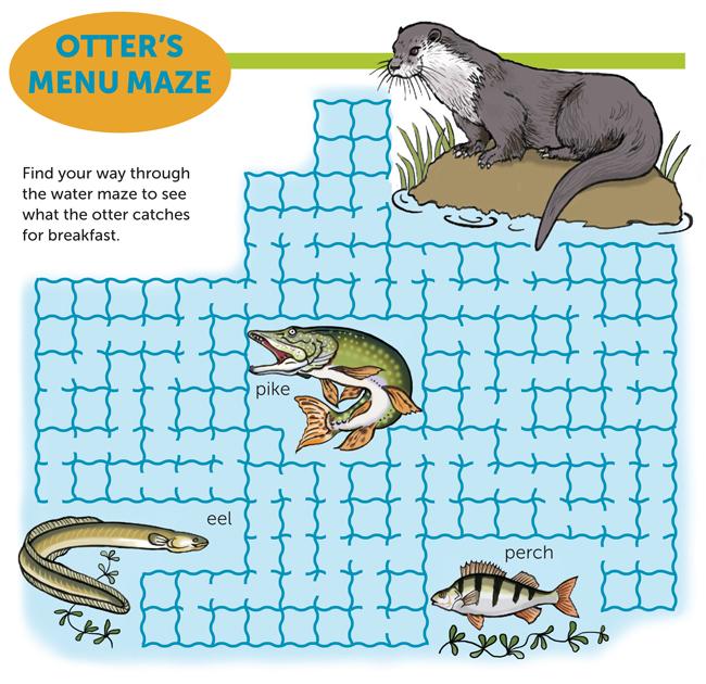 Otter's Menu maze