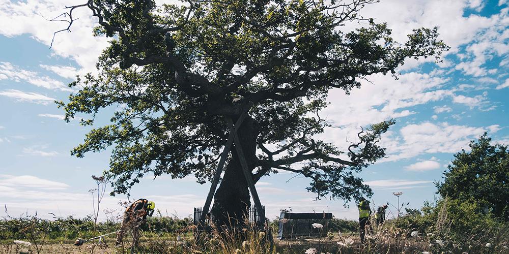 ketts oak