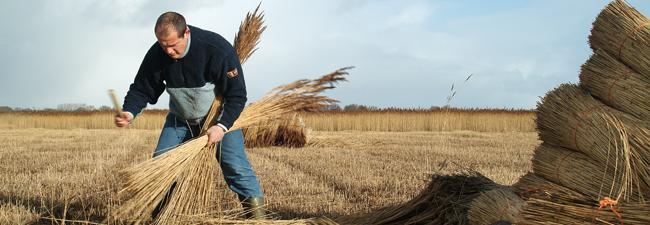 Bill Burgess, Norfolk reed cutter